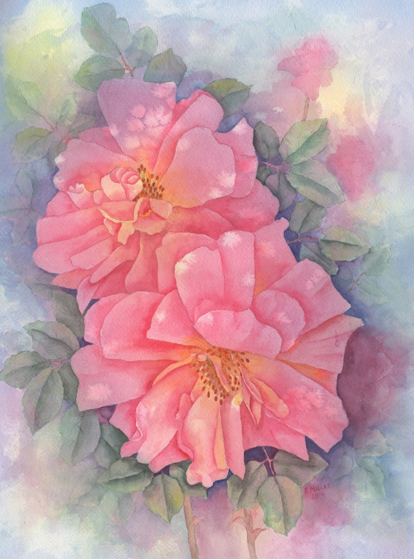 Anne Millar.Picadilly Rose