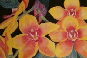 genine-hanns-miniature-moth-orchid