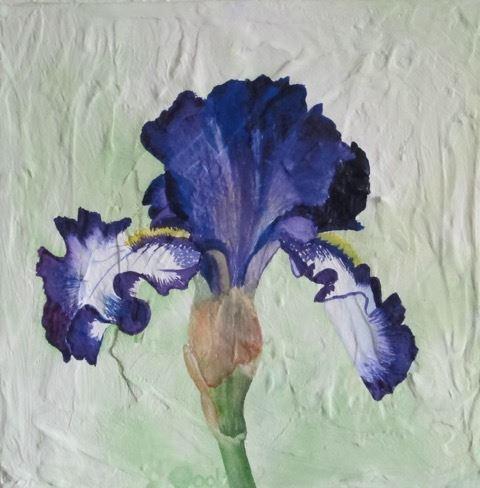Dool.German bearded Iris on textured background