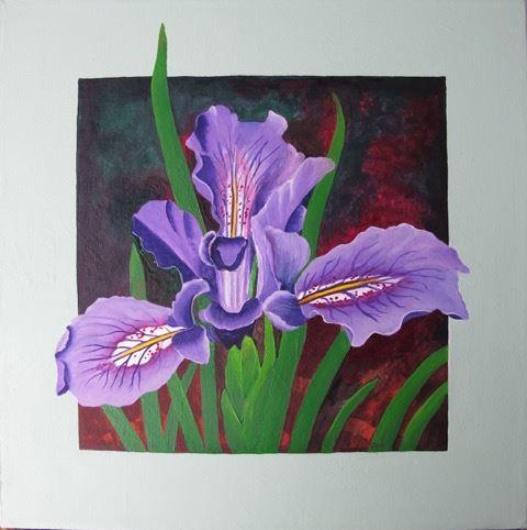 Dool.Iris tenax