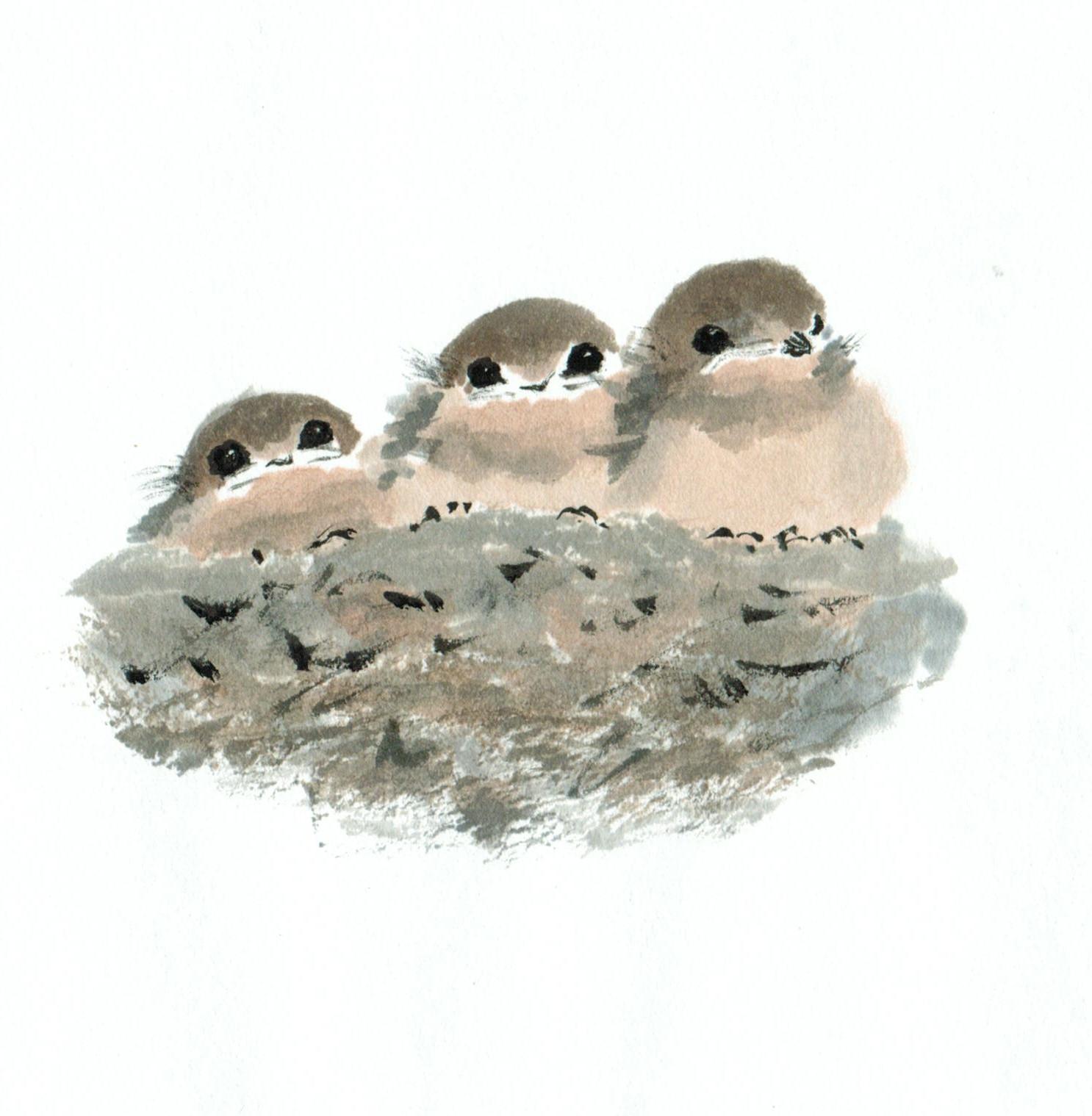 Ann Gibbard - Swallows