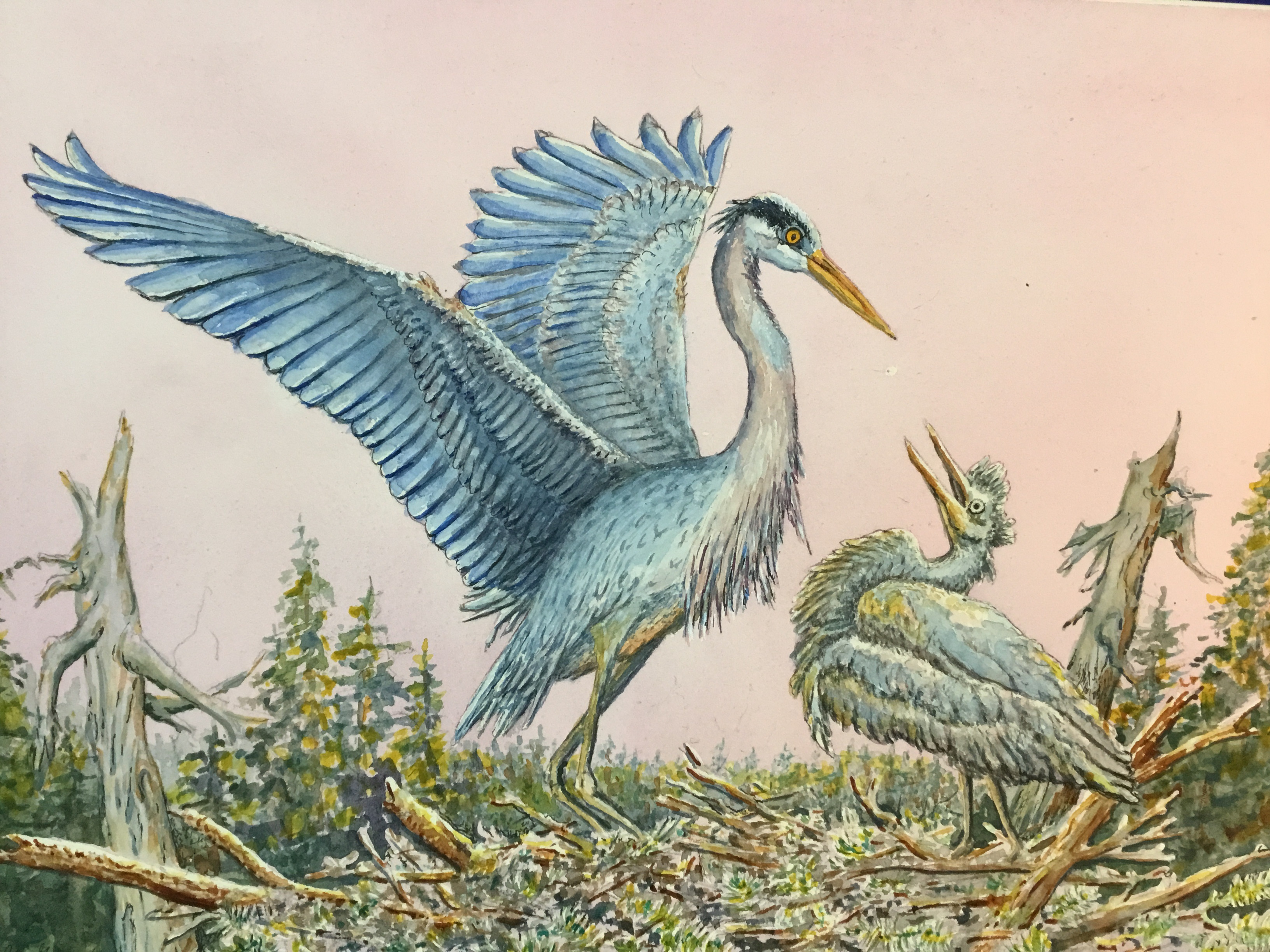 Blue Heron and Baby for Show